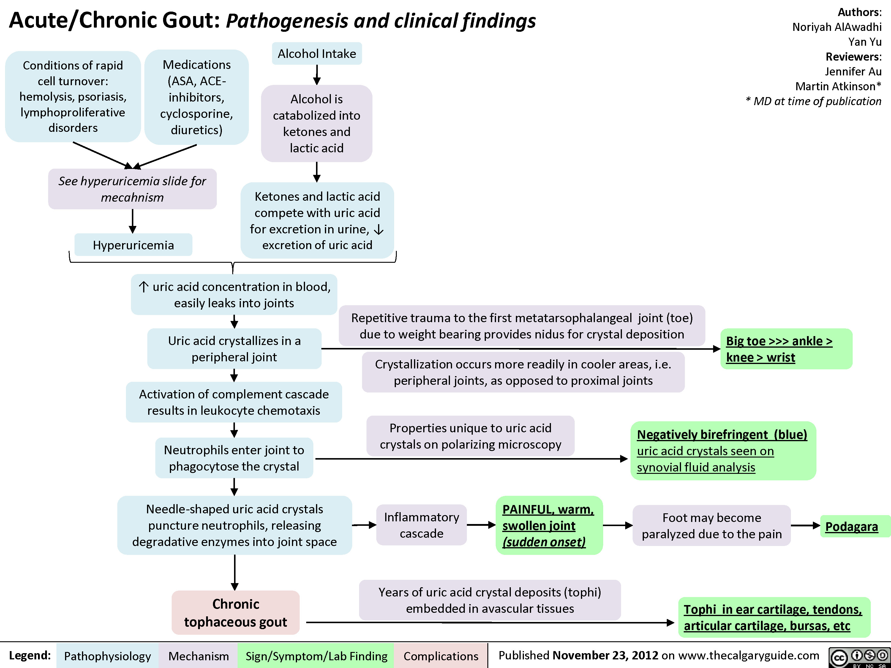 Gout Pathogenesis and Clinical Findings