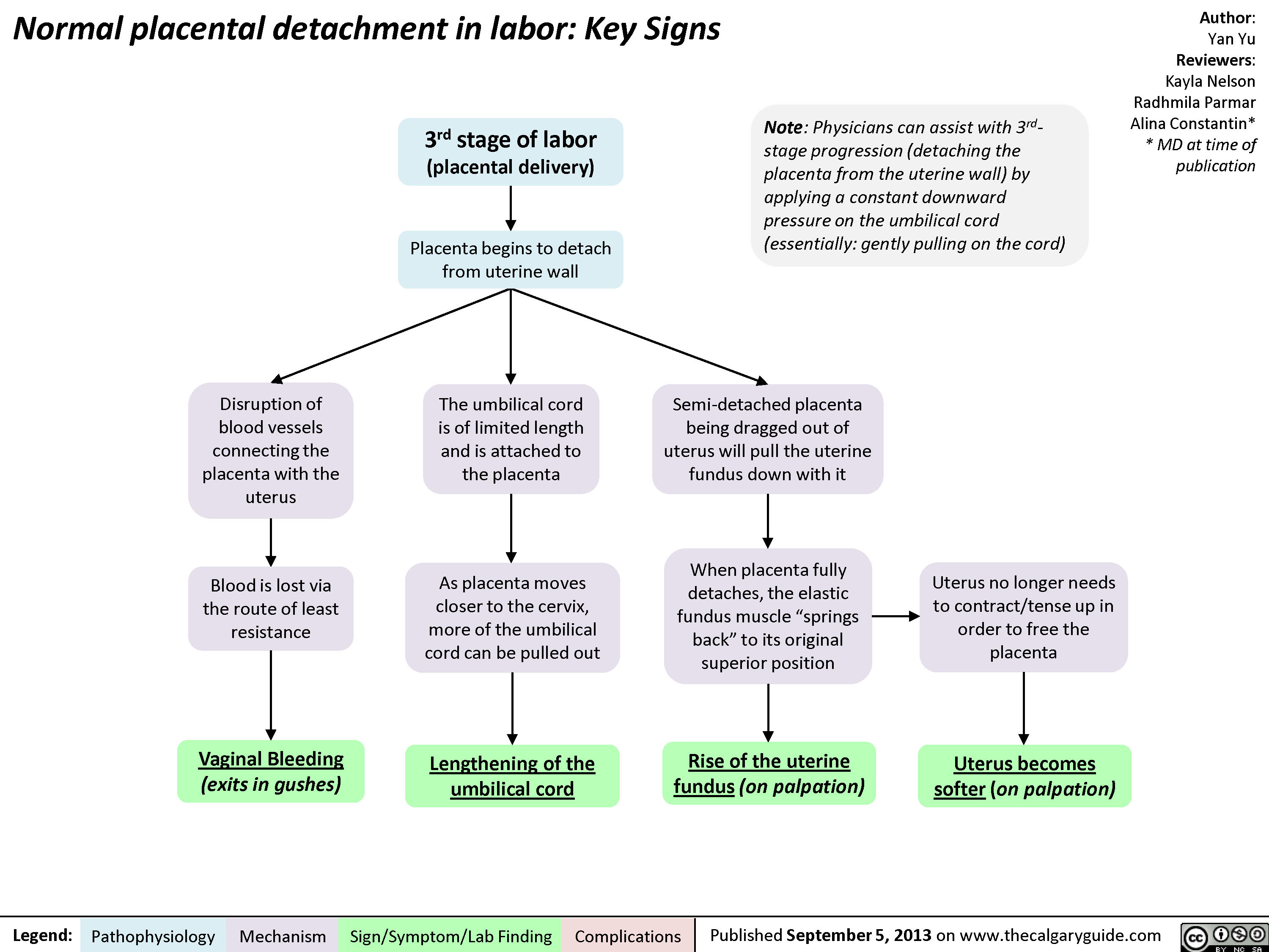 Normal Signs of Placental Detachment