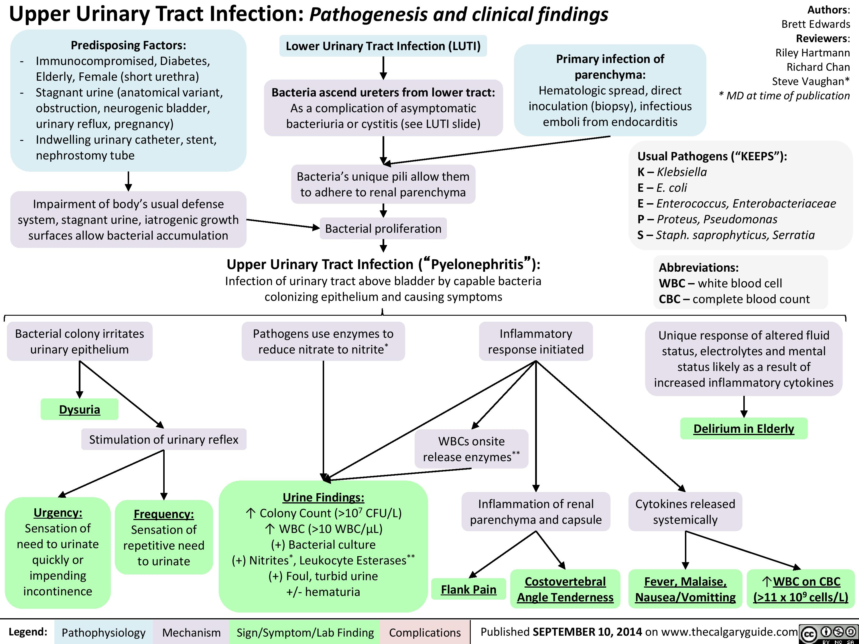 Upper Urinary Tract infection (UUTI): Pathogenesis and Clinical Findings