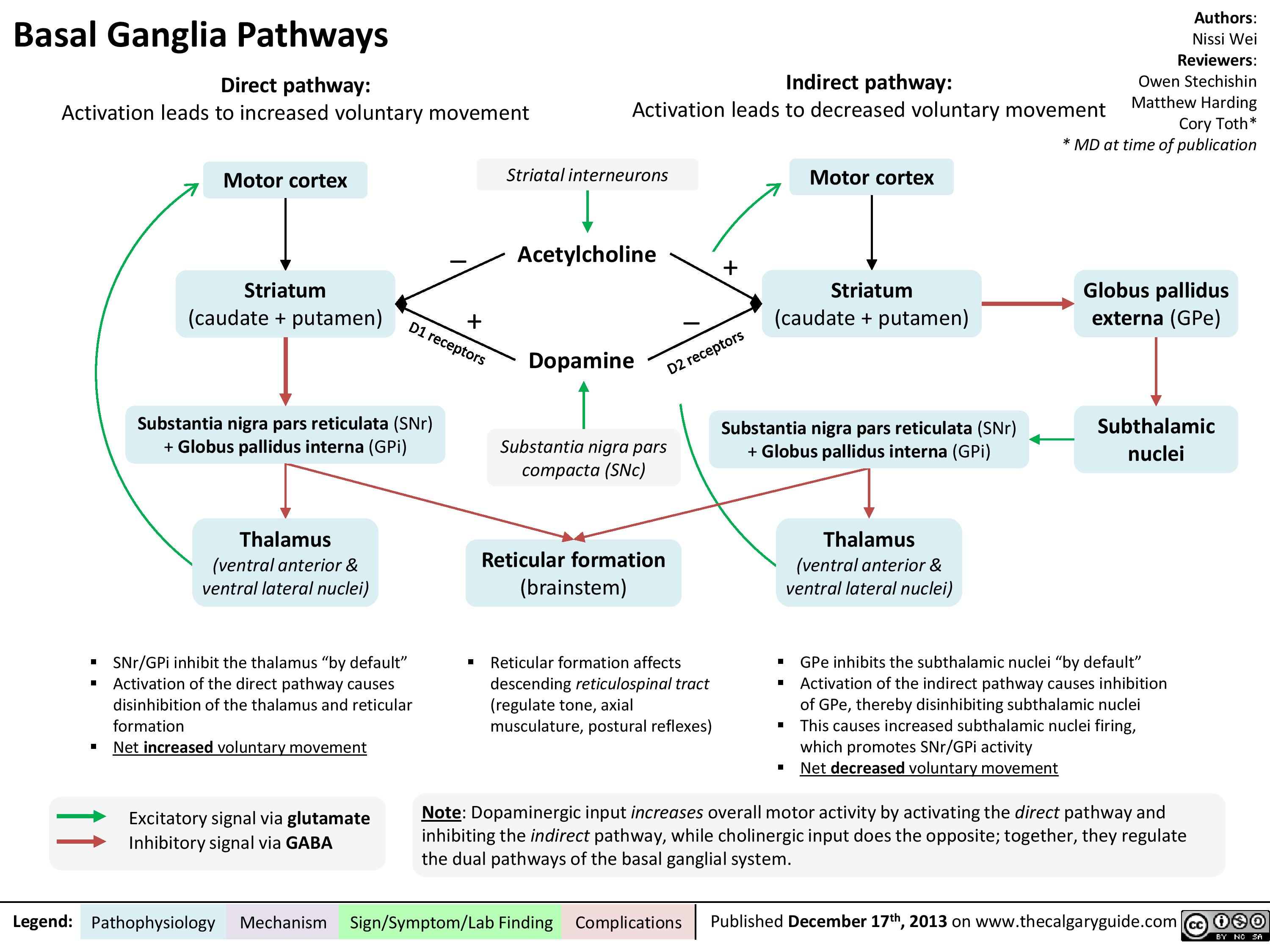 Basal ganglia pathways