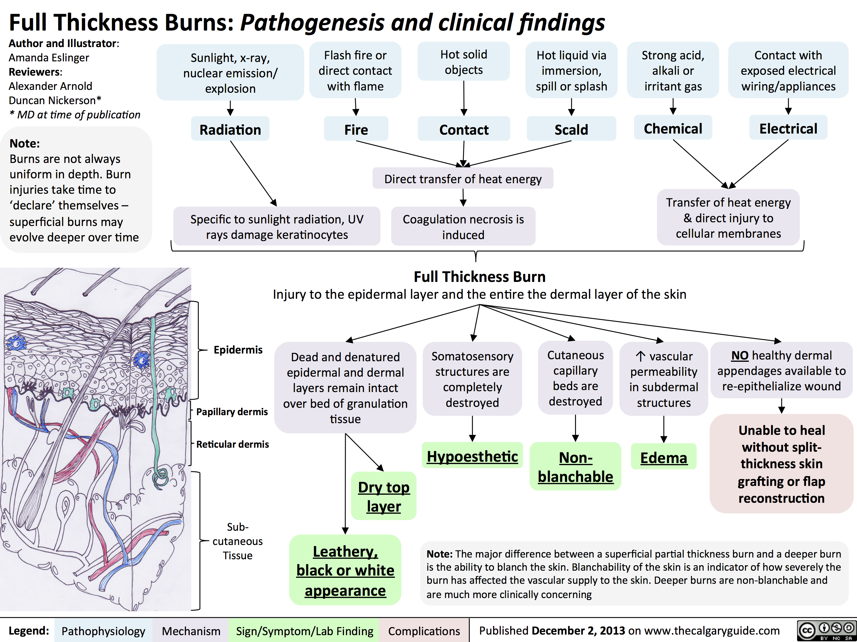 Full Thickness Burns - Pathogenesis and Clinical Findings