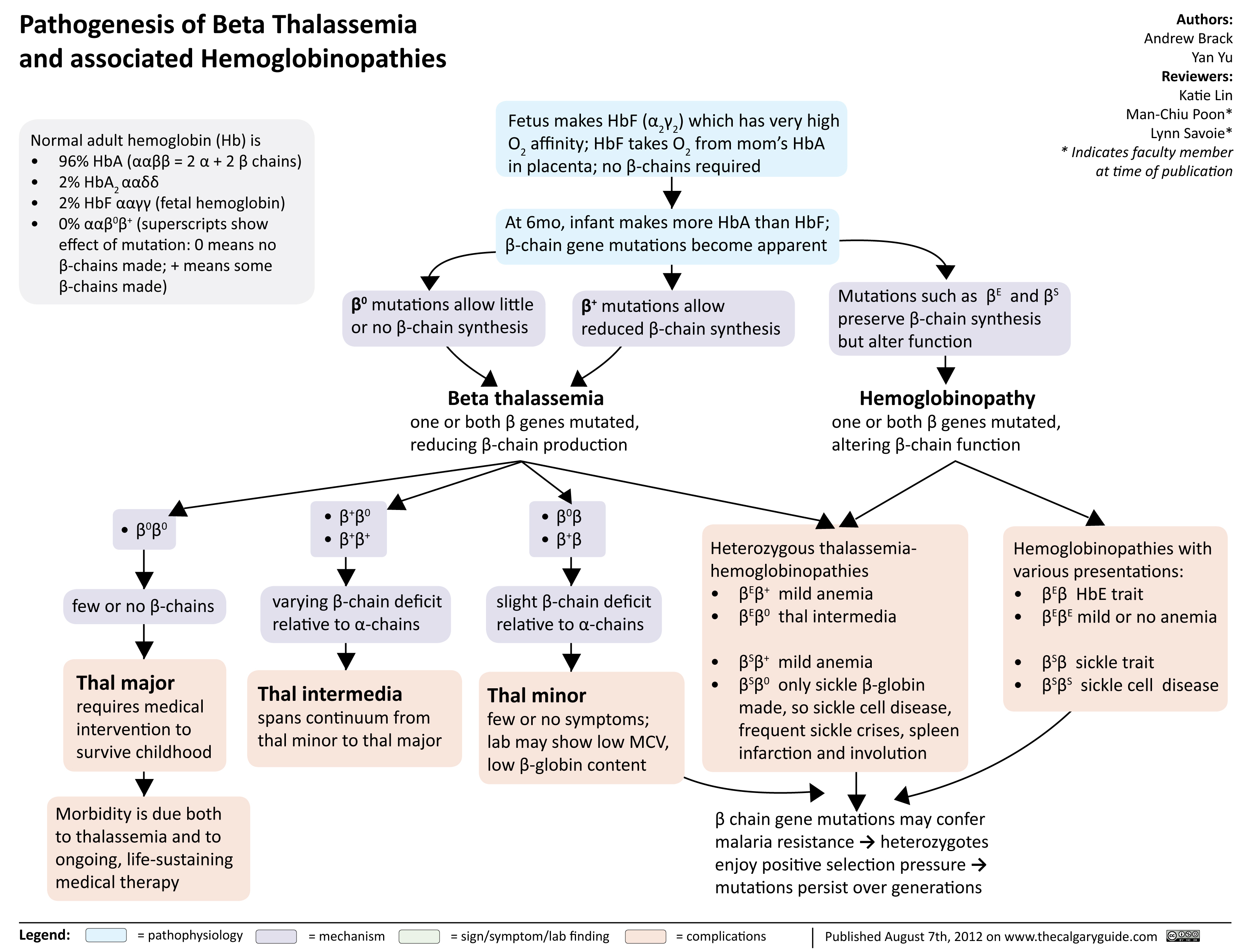 Pathogenesis of Beta Thalassemia