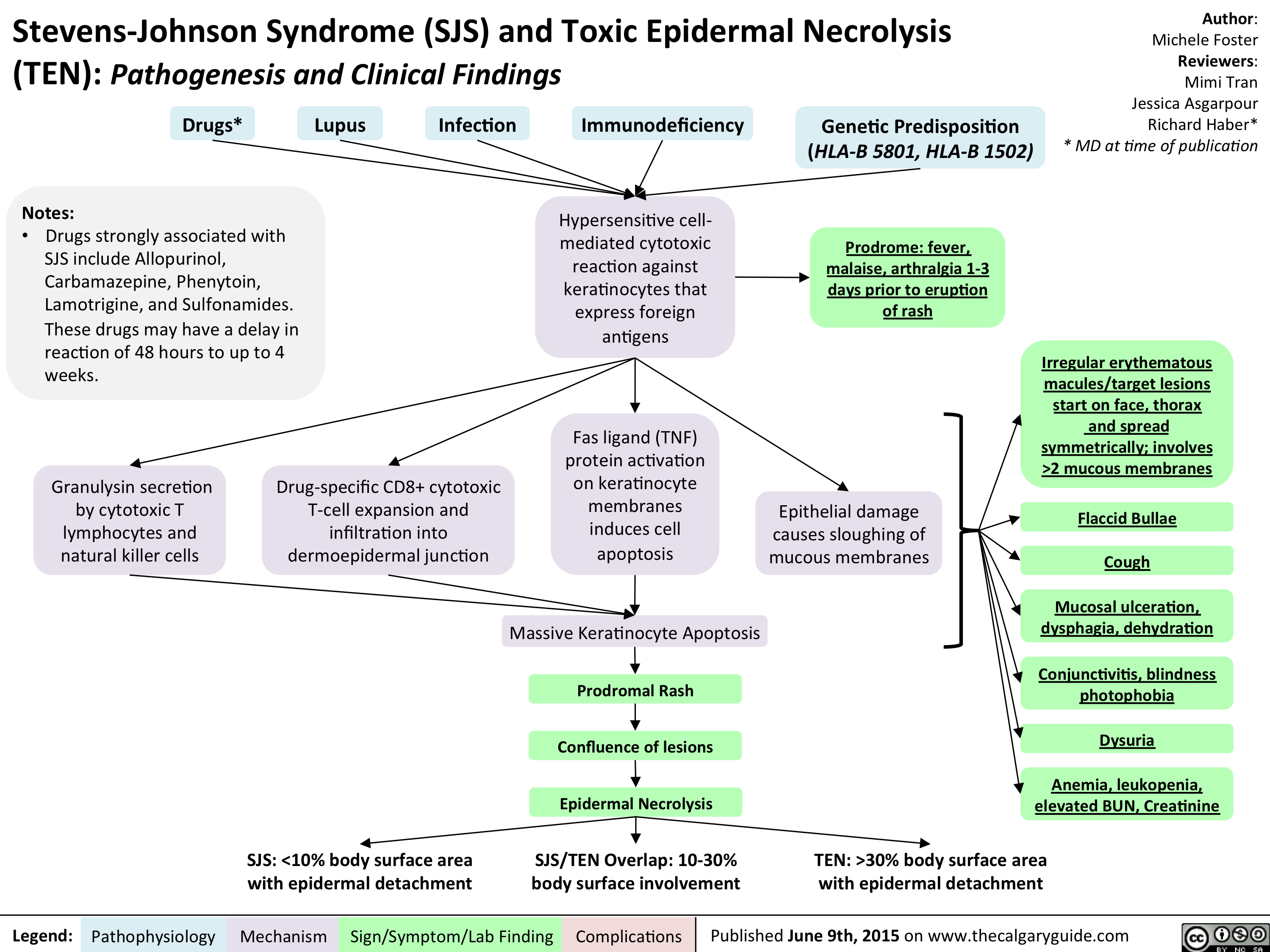 Stevens-Johnson Syndrome (SJS) and Toxic Epidermal Necrolysis (TEN) - Pathogenesis and Clinical Findings
