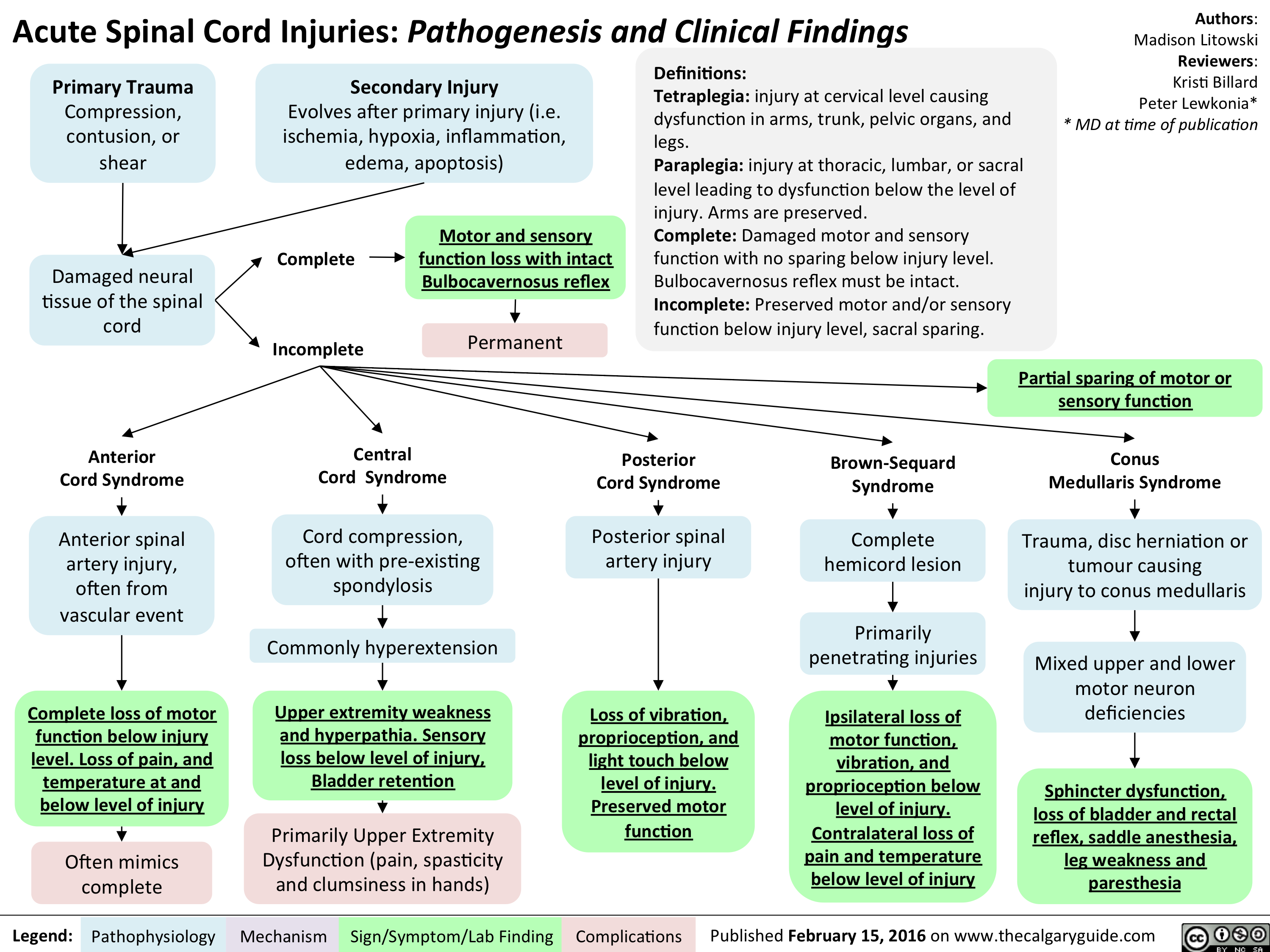 Acute Spinal Cord Injuries - Pathogenesis and clinical findings