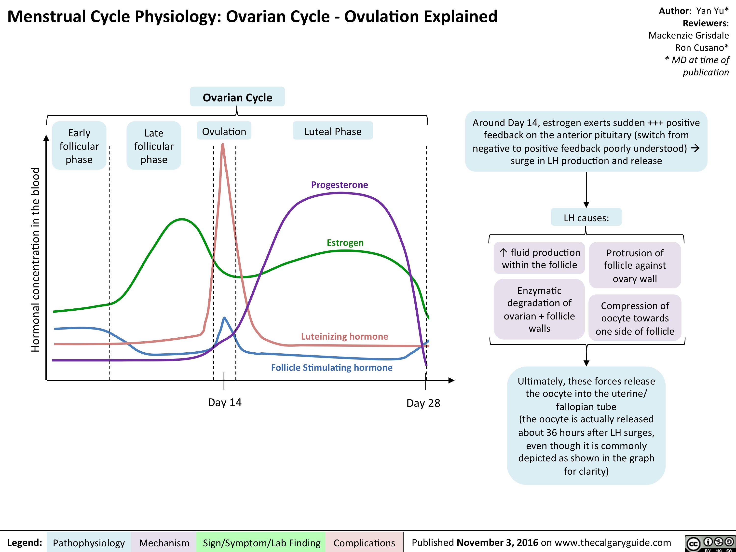 finalized-mg-rc-yy-menstrual-cycle-physiology