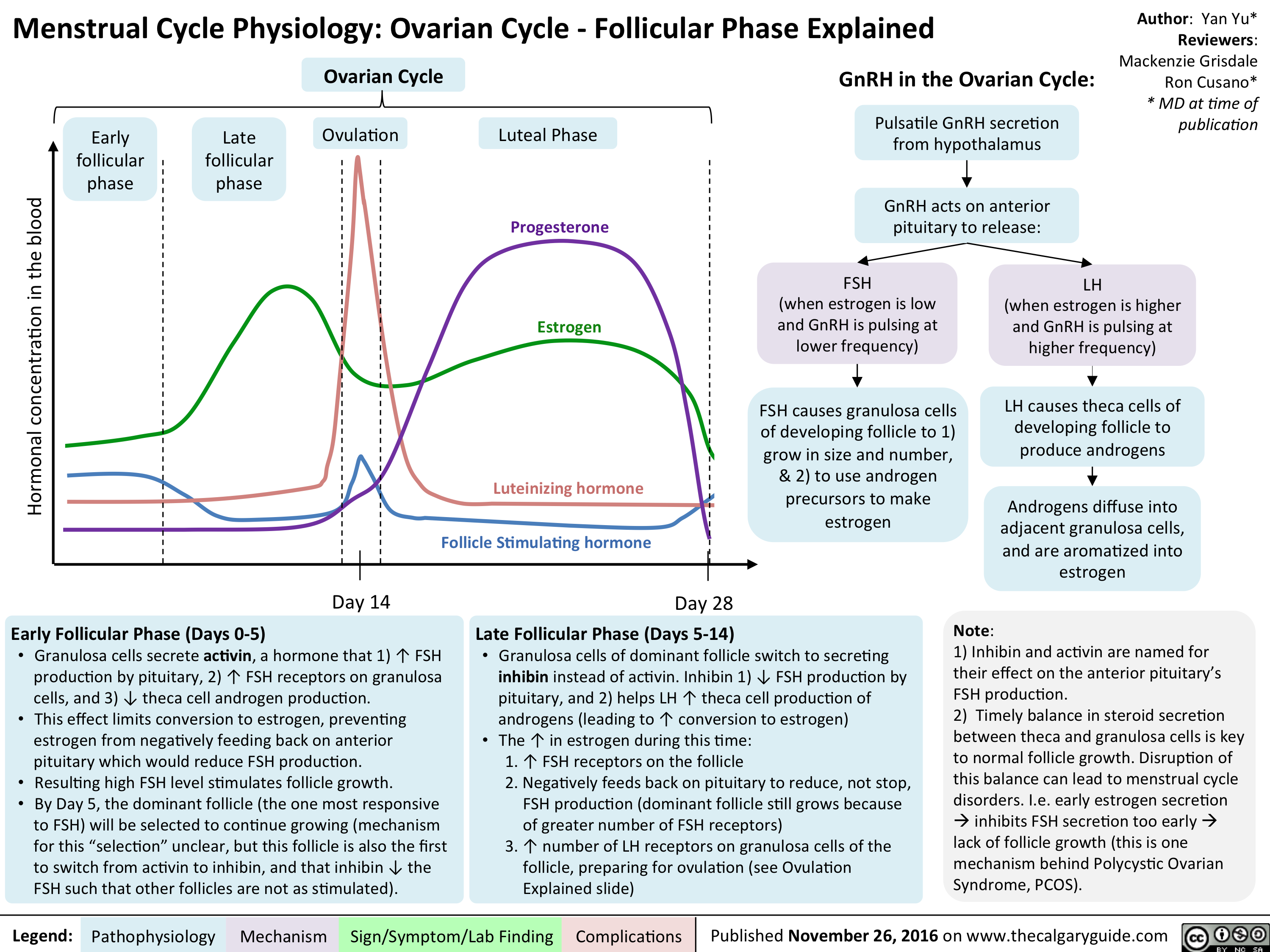 menstrual-cycle-physiology-ovarian-cycle-follicular-phase-explained
