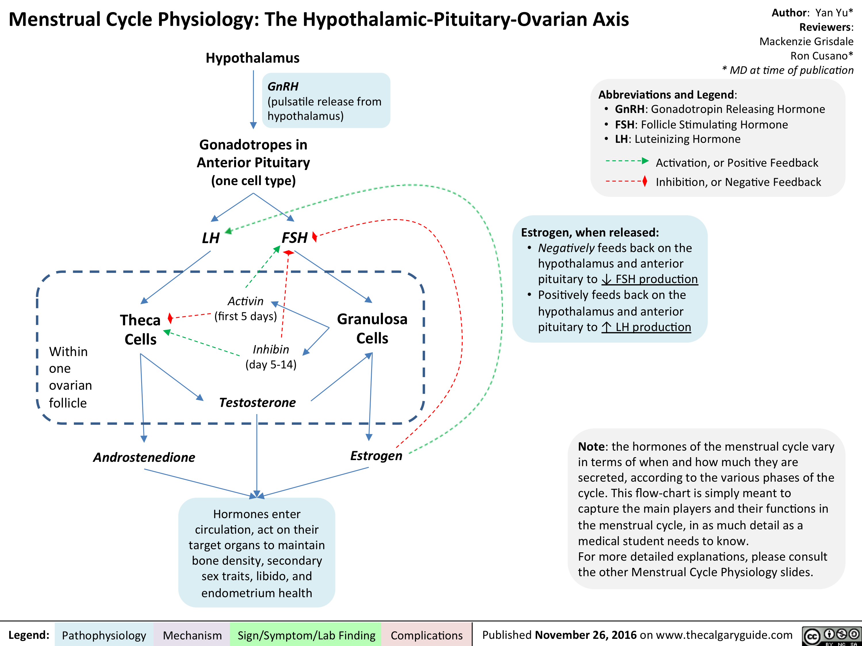 menstrual-cycle-physiology-the-hypothalamic-pituitary-ovarian-axis